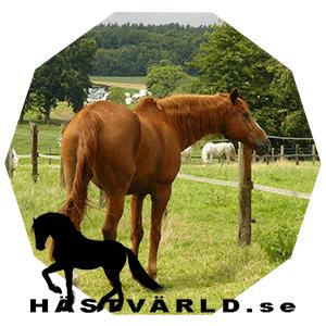 Elektrisk stimulering kan minska ryggsmärta hos hästar